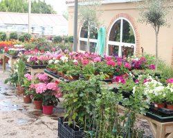 Loving Lavanda Talleres Florales