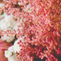Flores detalle rosa